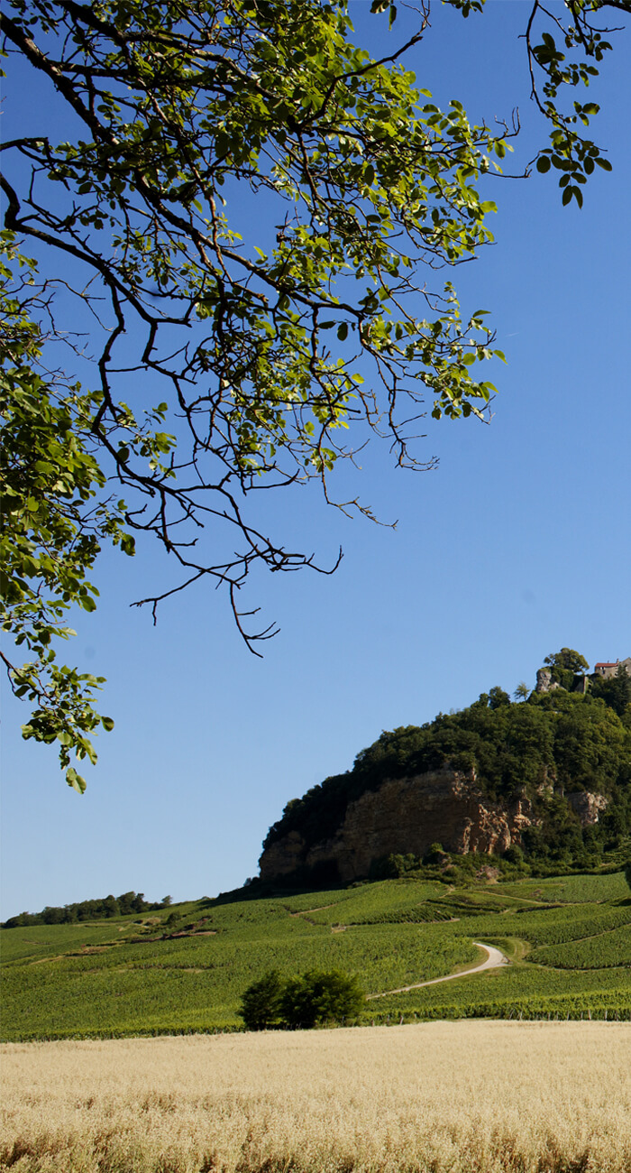EUREKA - reportage photo Le Vin